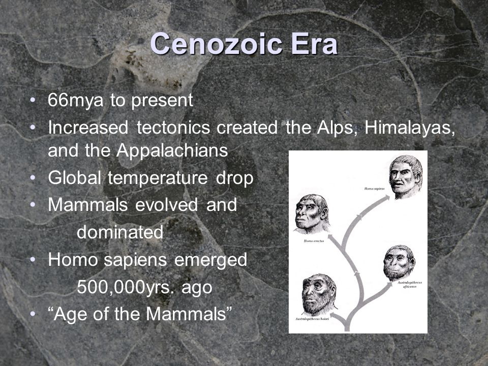 Cenozoic Era 66mya to present