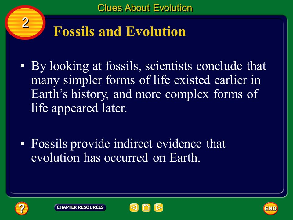 Clues About Evolution 2. Fossils and Evolution.