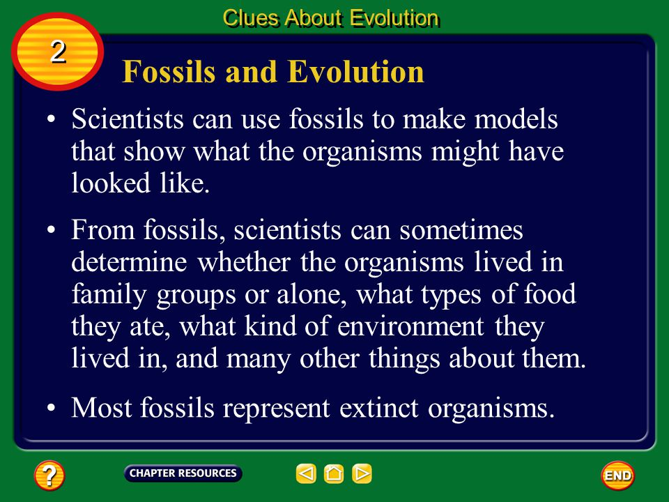 Clues About Evolution 2. Fossils and Evolution. Scientists can use fossils to make models that show what the organisms might have looked like.