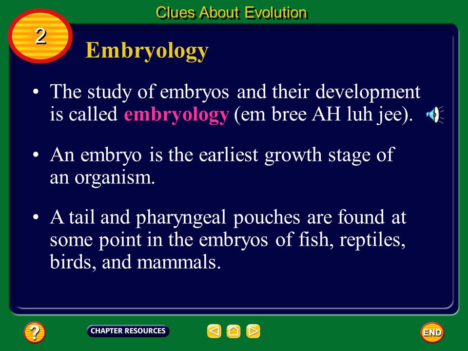 Clues About Evolution 2. Embryology. The study of embryos and their development is called embryology (em bree AH luh jee).