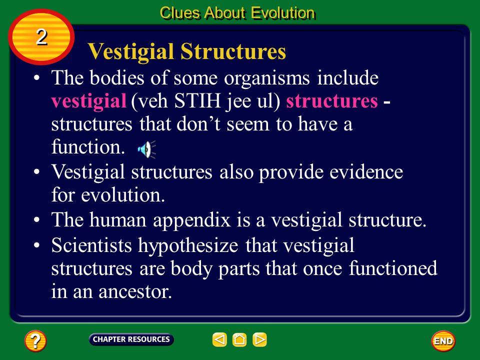 Clues About Evolution 2. Vestigial Structures.