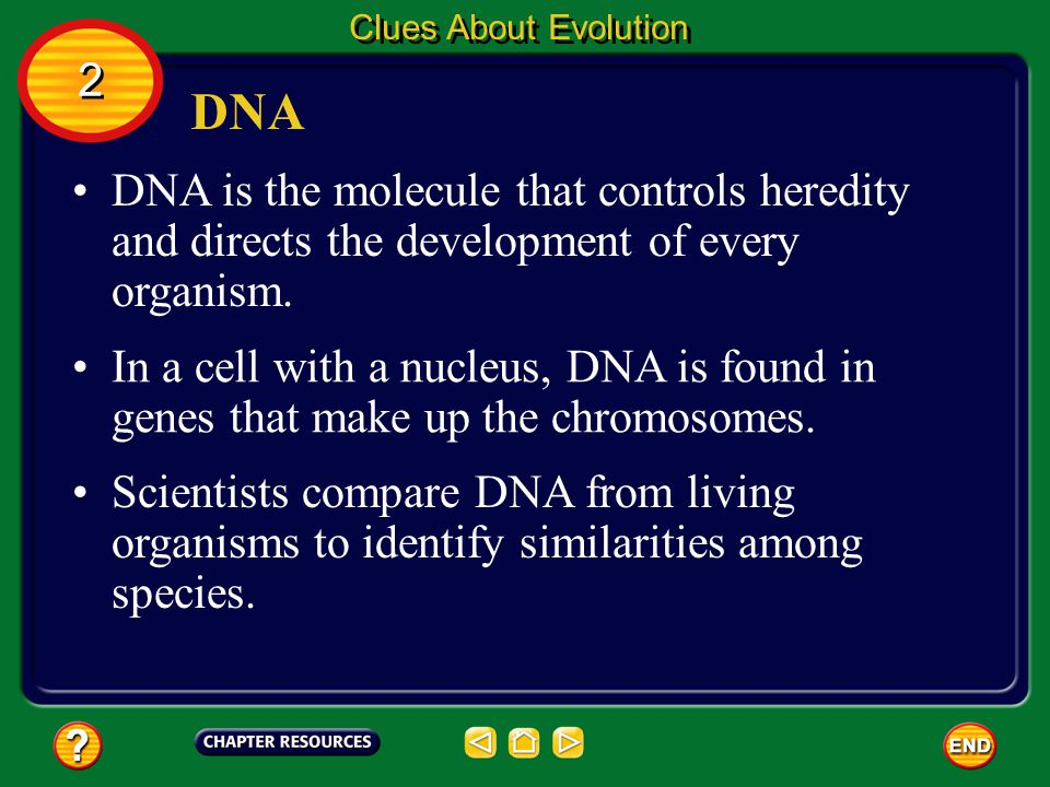 Clues About Evolution 2. DNA. DNA is the molecule that controls heredity and directs the development of every organism.