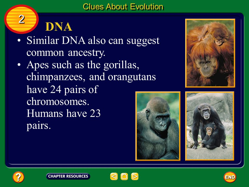 DNA 2 Similar DNA also can suggest common ancestry.