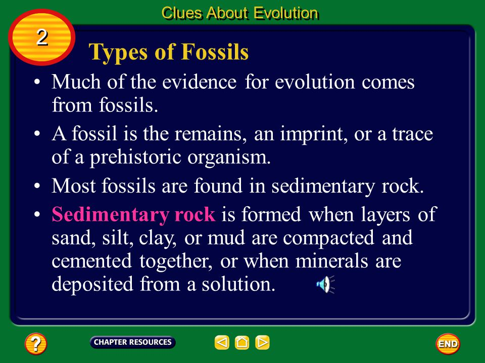 Clues About Evolution 2. Types of Fossils. Much of the evidence for evolution comes from fossils.