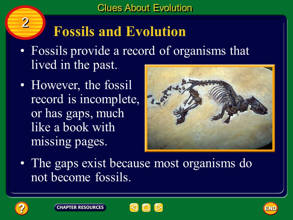 Clues About Evolution 2. Fossils and Evolution. Fossils provide a record of organisms that lived in the past.