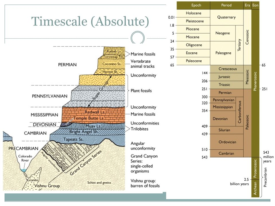 Timescale (Absolute)