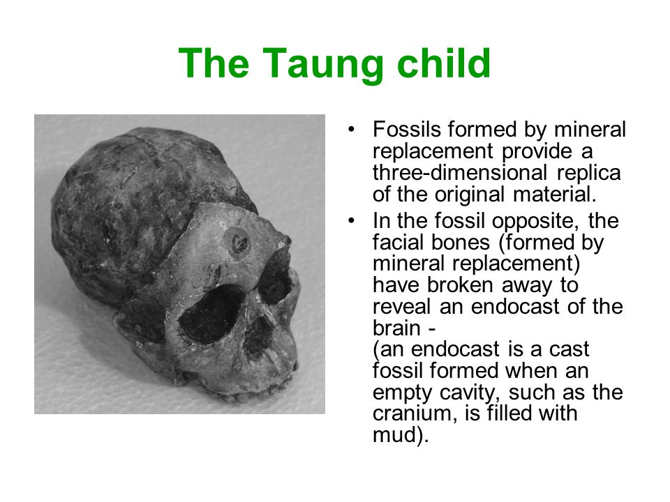 The Taung child Fossils formed by mineral replacement provide a three-dimensional replica of the original material.