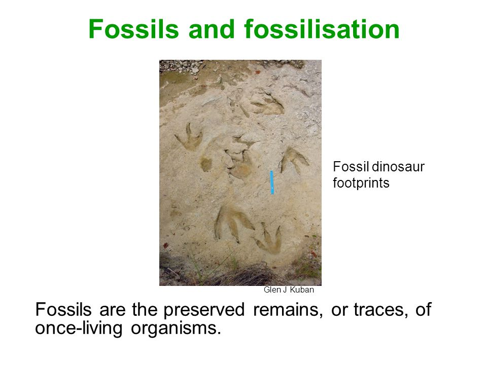 Fossils and fossilisation