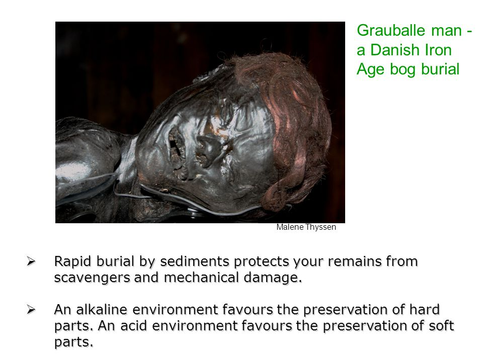 Grauballe man - a Danish Iron Age bog burial