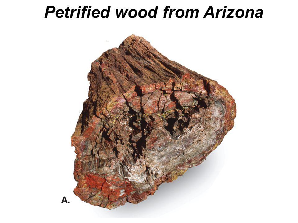Petrified wood from Arizona