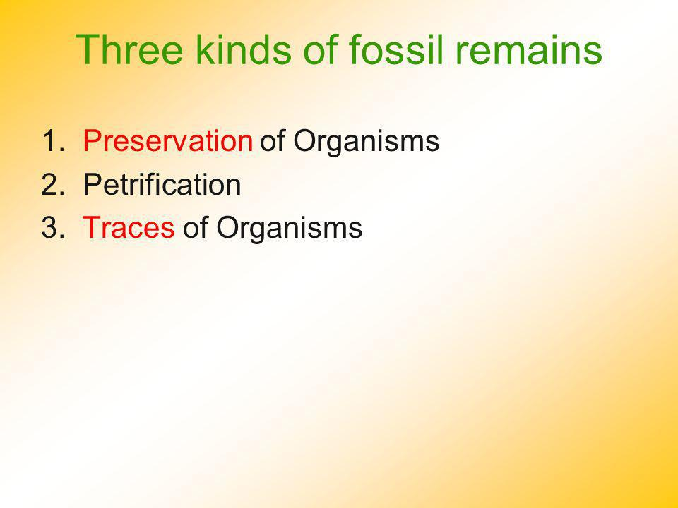 Three kinds of fossil remains