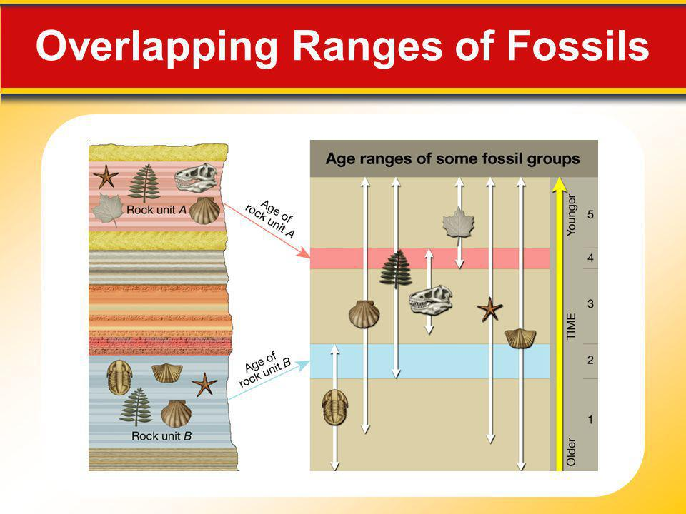 Overlapping Ranges of Fossils