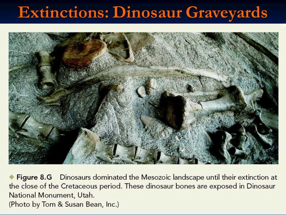 Extinctions: Dinosaur Graveyards
