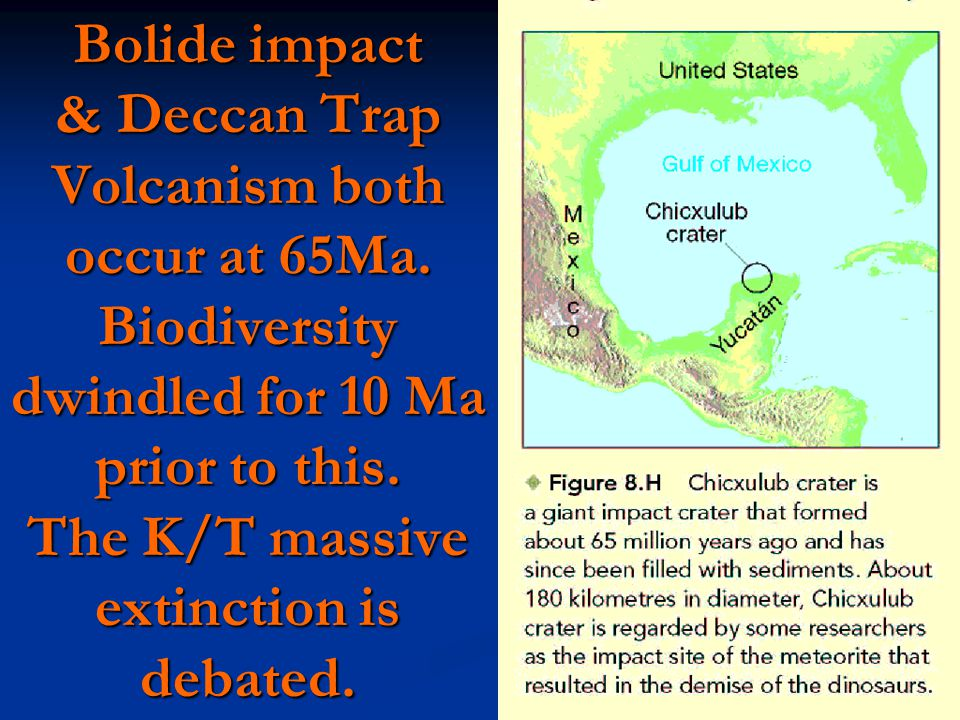 Bolide impact & Deccan Trap Volcanism both occur at 65Ma