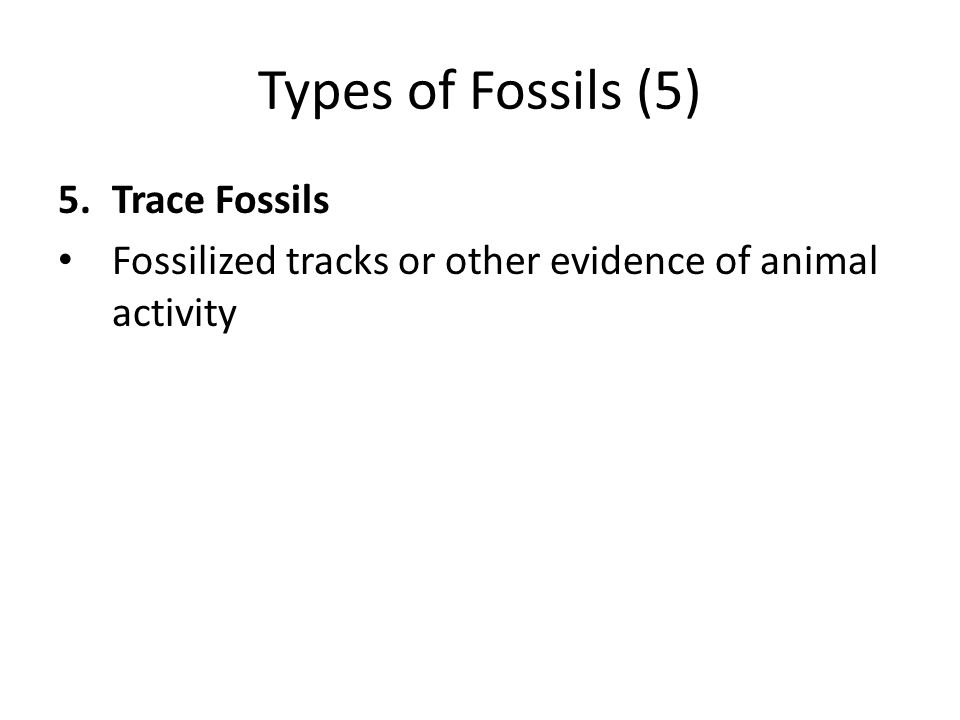 Types of Fossils (5) Trace Fossils