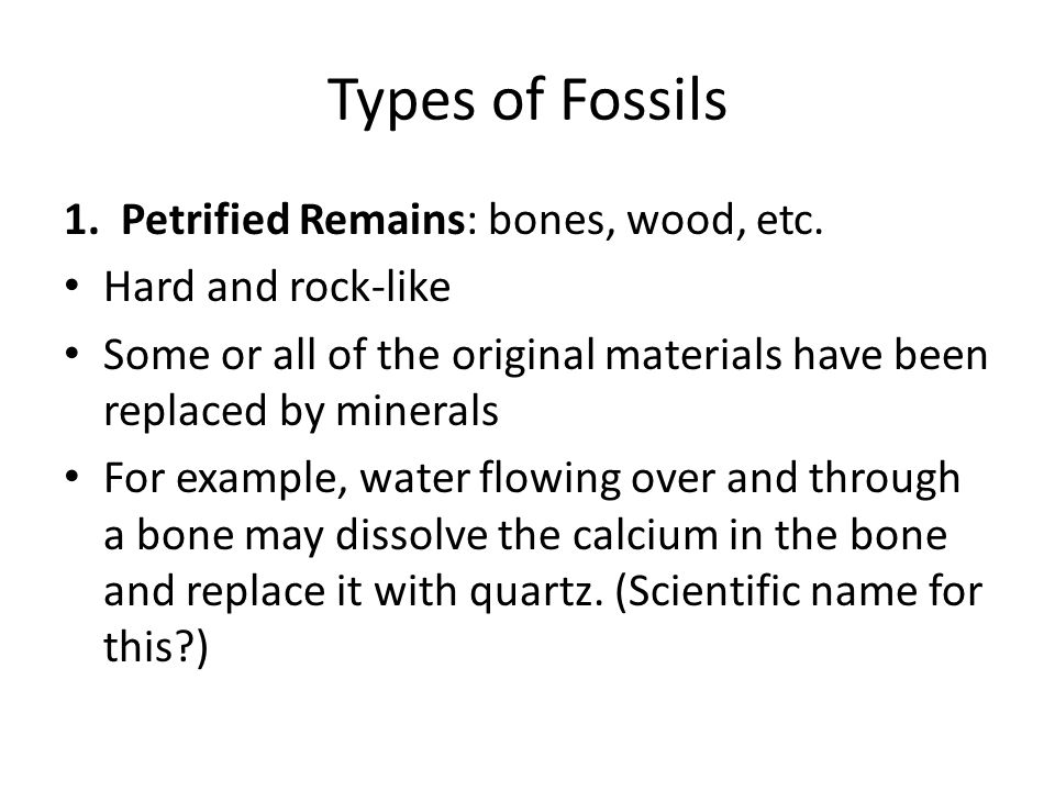 Types of Fossils 1. Petrified Remains: bones, wood, etc.