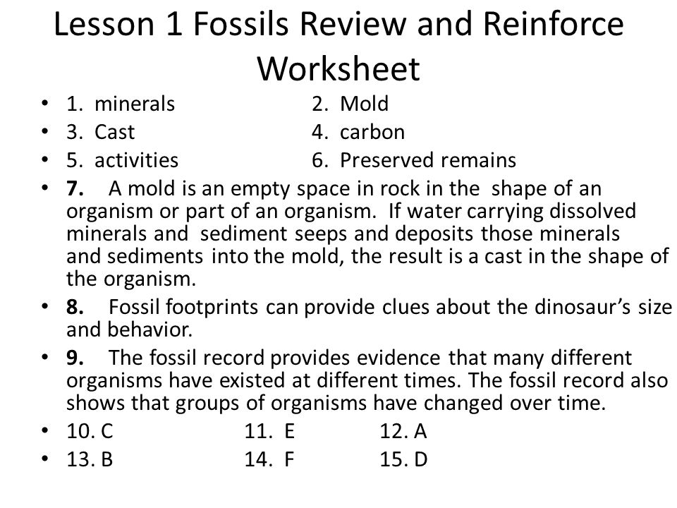 Lesson 1 Fossils Review and Reinforce Worksheet