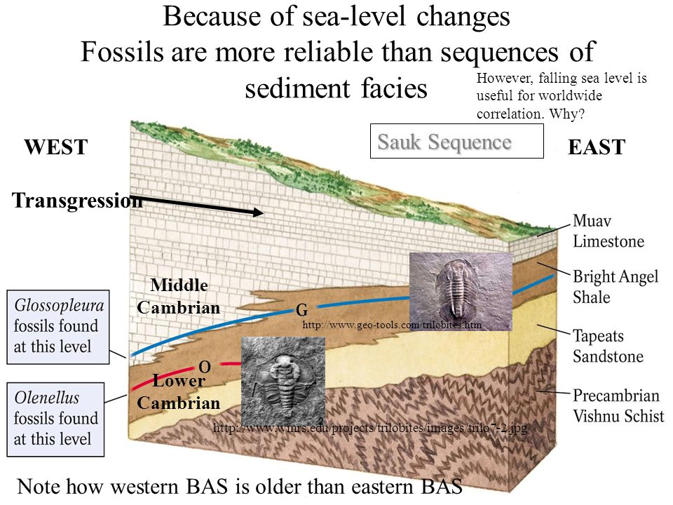 Because of sea-level changes Fossils are more reliable than sequences of sediment facies
