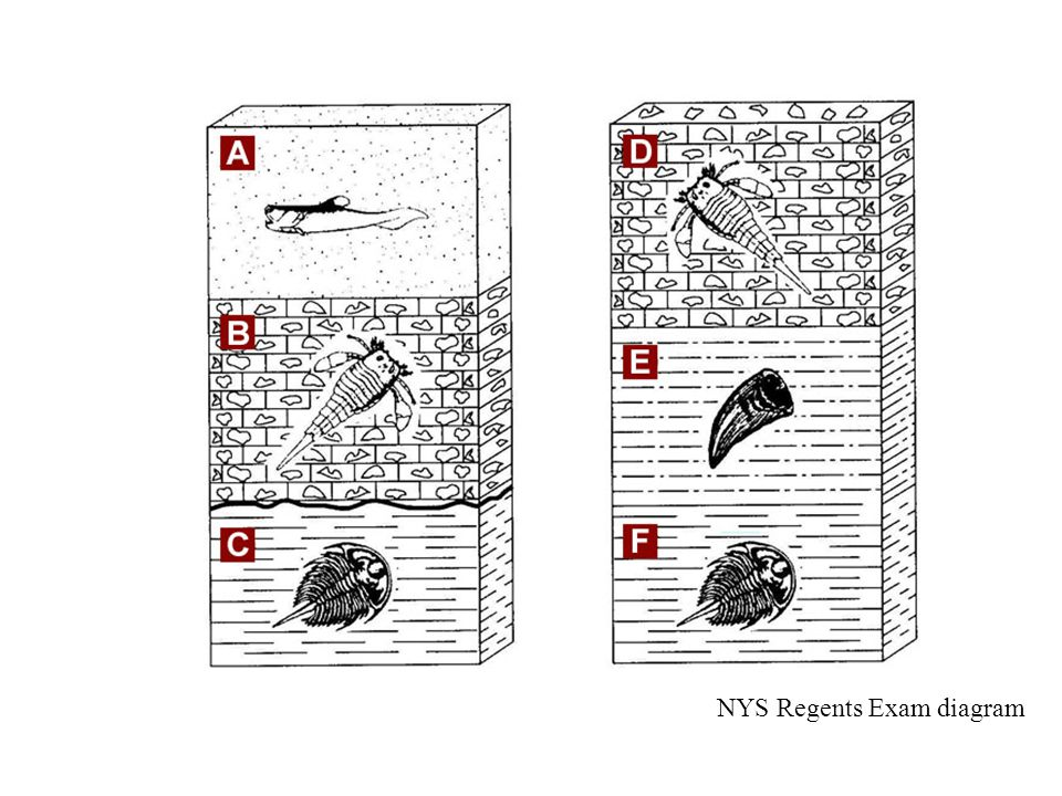 NYS Regents Exam diagram