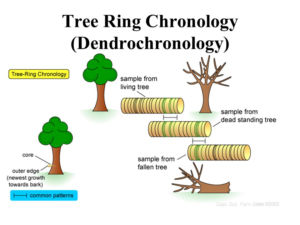Tree Ring Chronology (Dendrochronology)