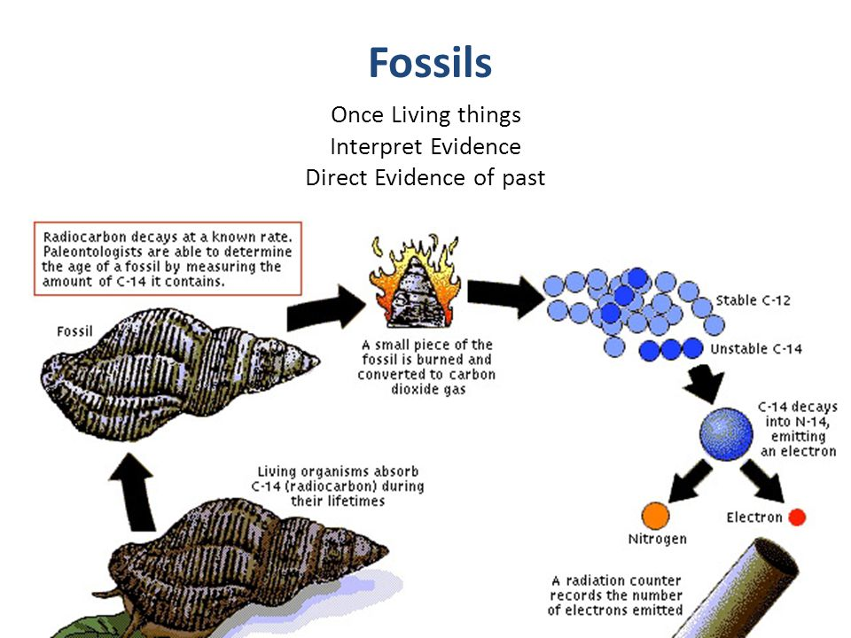 Once Living things Interpret Evidence Direct Evidence of past