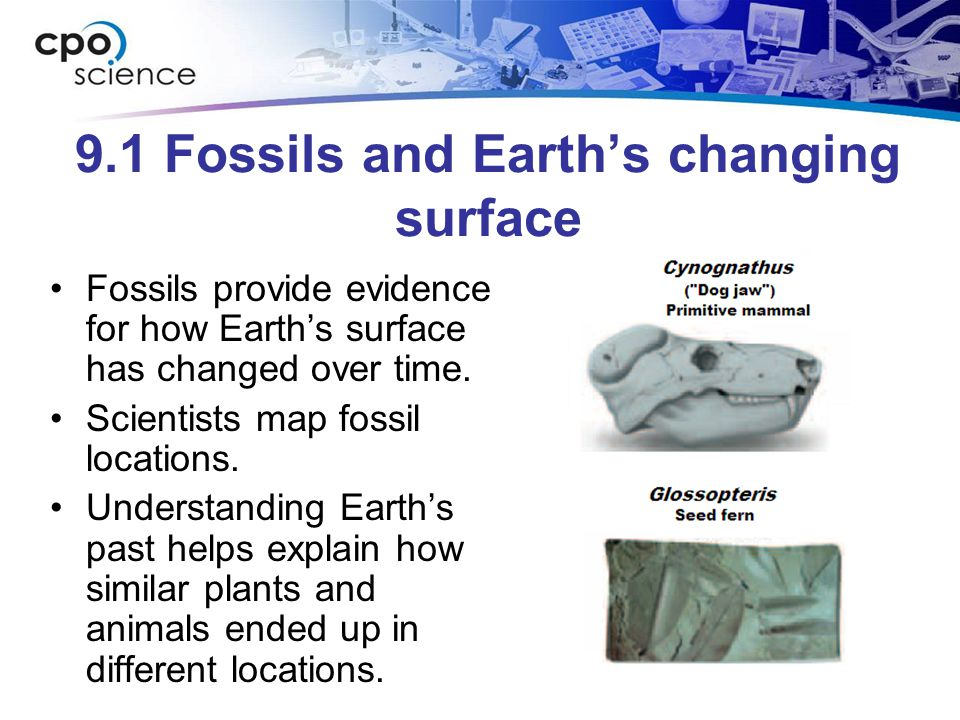 9.1 Fossils and Earth's changing surface