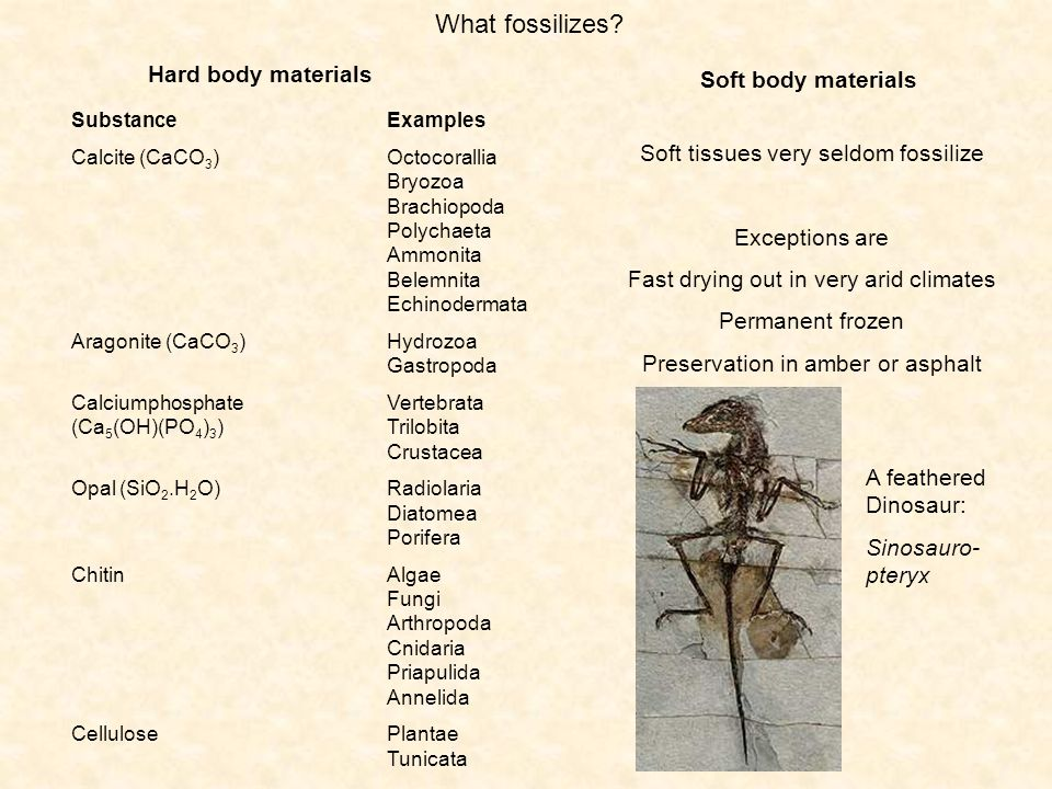 What fossilizes Hard body materials Soft body materials