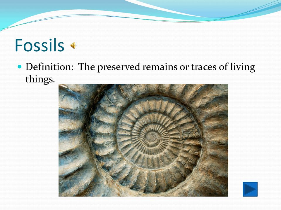 Fossils Definition: The preserved remains or traces of living things.