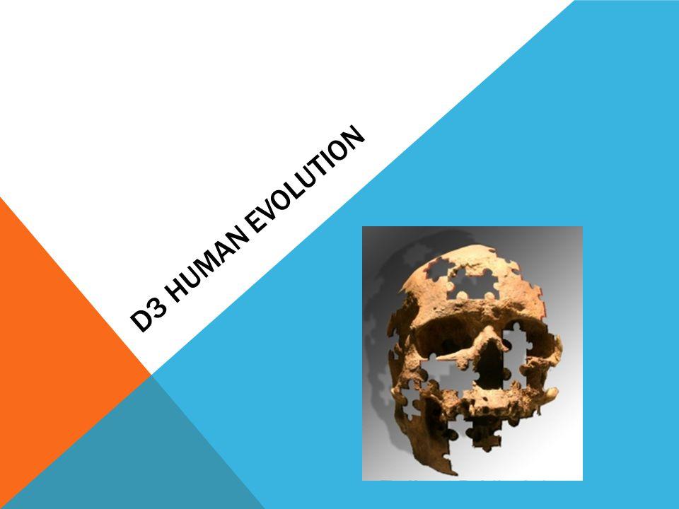 D3 Human Evolution