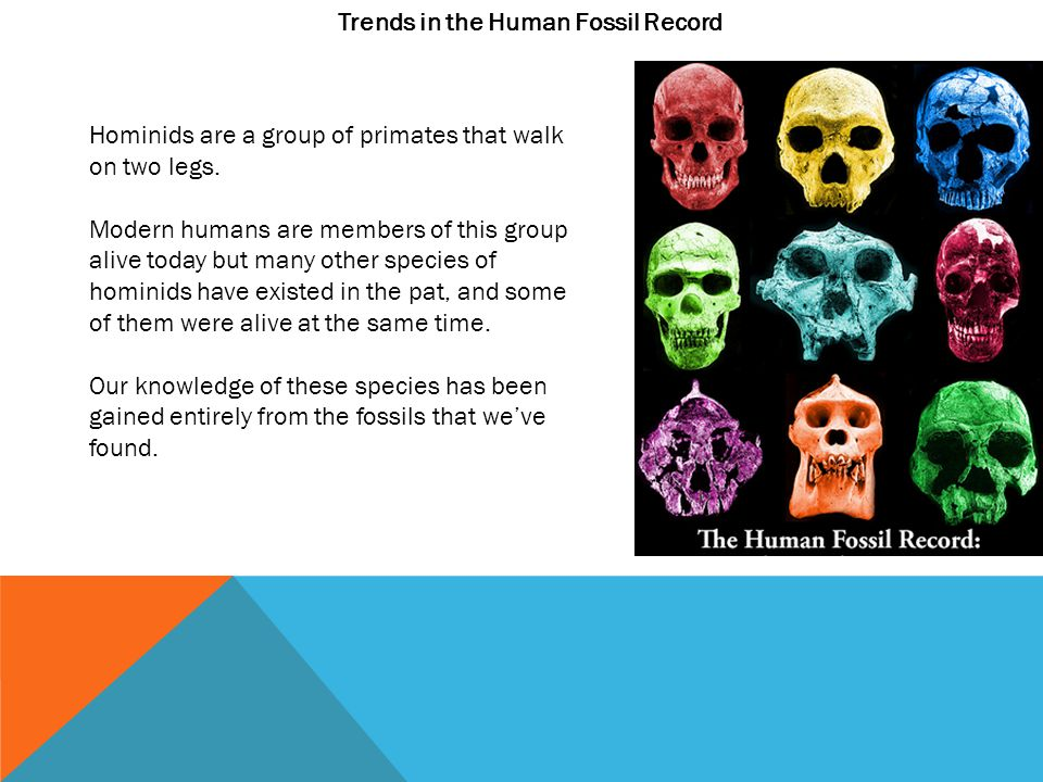 Trends in the Human Fossil Record