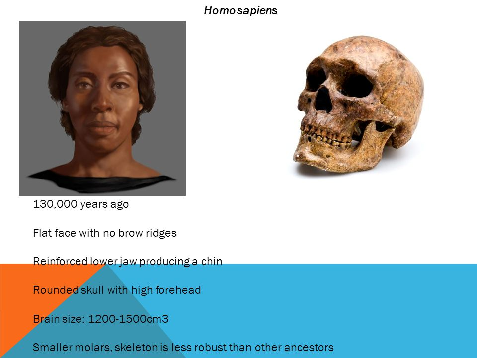 Homo sapiens 130,000 years ago. Flat face with no brow ridges. Reinforced lower jaw producing a chin.