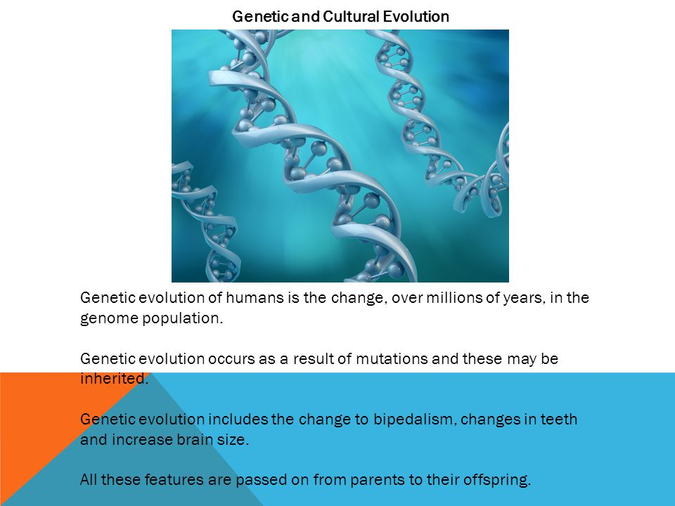 Genetic and Cultural Evolution
