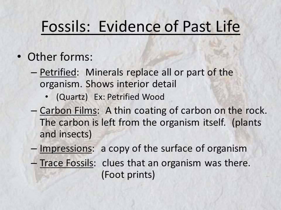 Fossils: Evidence of Past Life