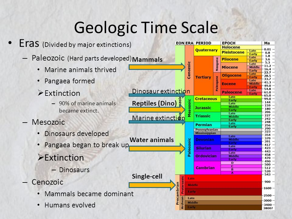 Geologic Time Scale Eras (Divided by major extinctions)