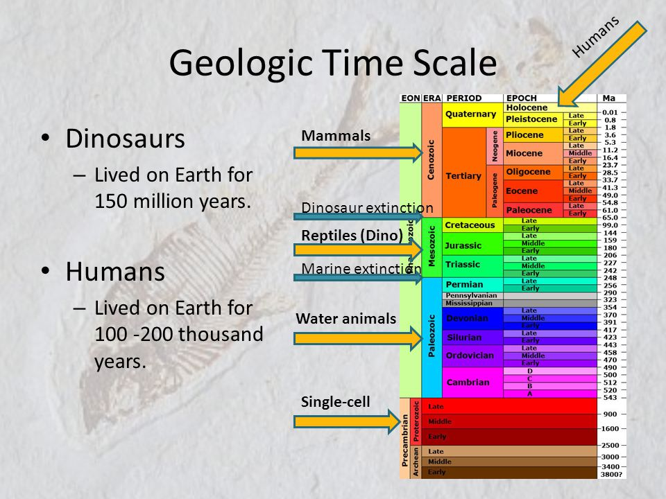 Geologic Time Scale Dinosaurs Humans