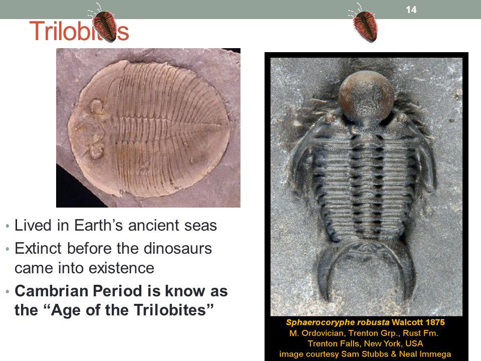 Trilobites Lived in Earth's ancient seas