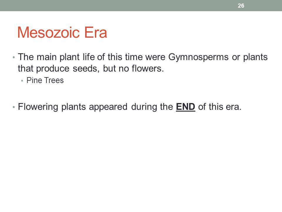 Mesozoic Era The main plant life of this time were Gymnosperms or plants that produce seeds, but no flowers.