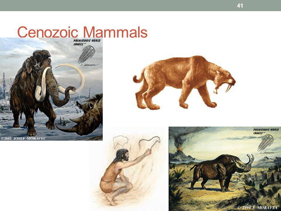 Cenozoic Mammals