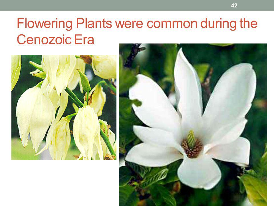 Flowering Plants were common during the Cenozoic Era