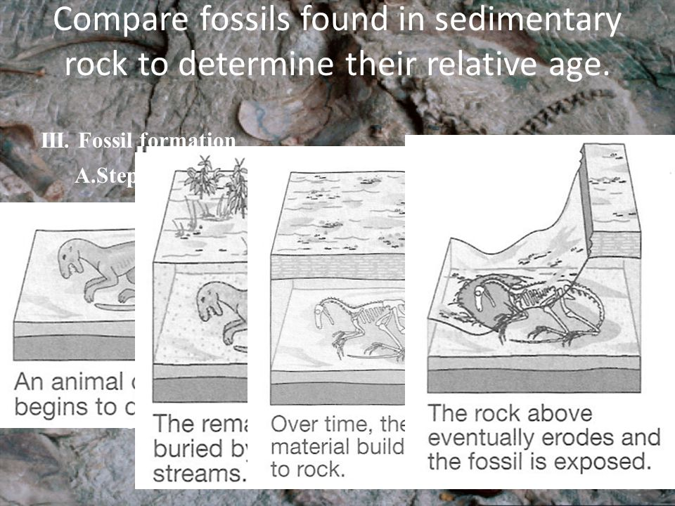 Compare fossils found in sedimentary rock to determine their relative age.
