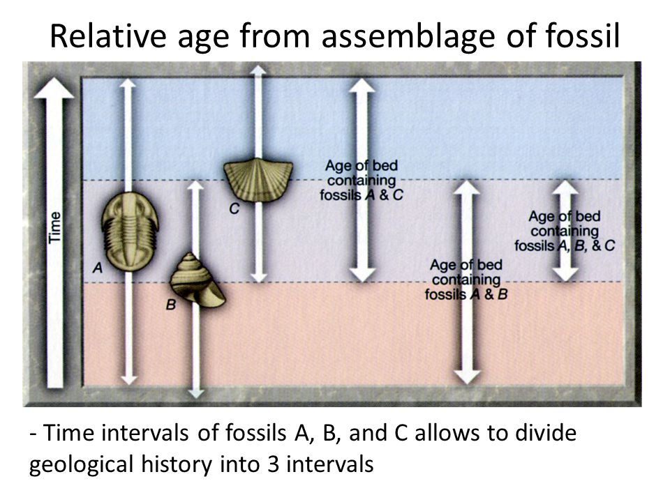 Relative age from assemblage of fossil
