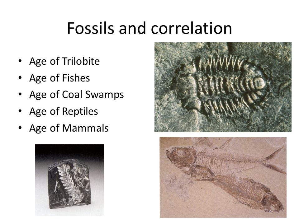 Fossils and correlation