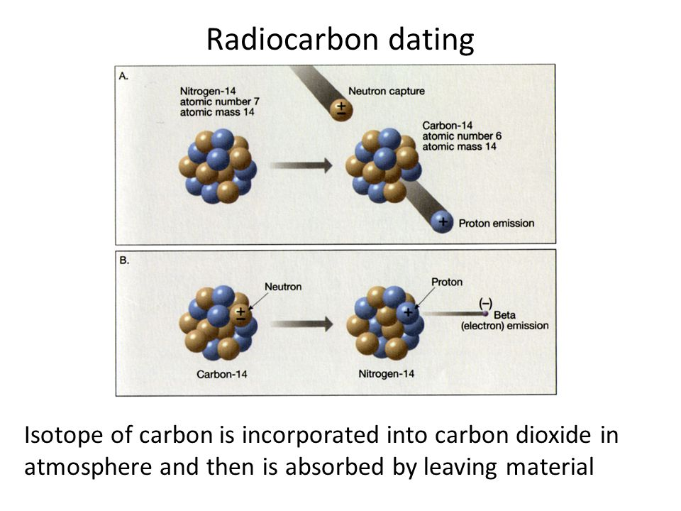 Radiocarbon dating Isotope of carbon is incorporated into carbon dioxide in atmosphere and then is absorbed by leaving material.
