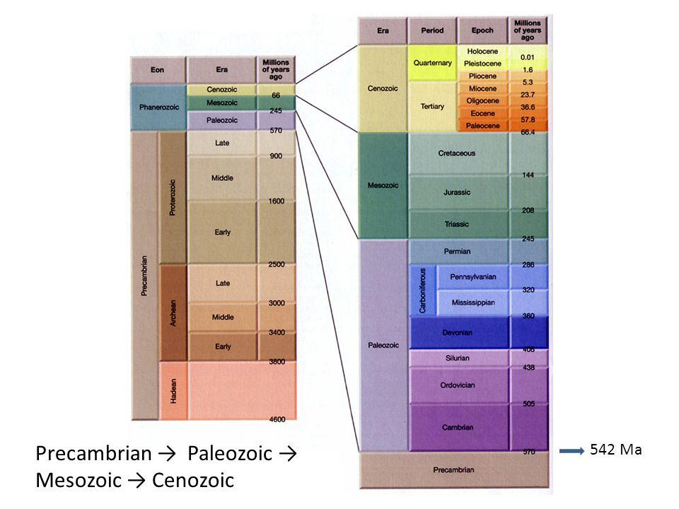 Precambrian → Paleozoic → Mesozoic → Cenozoic
