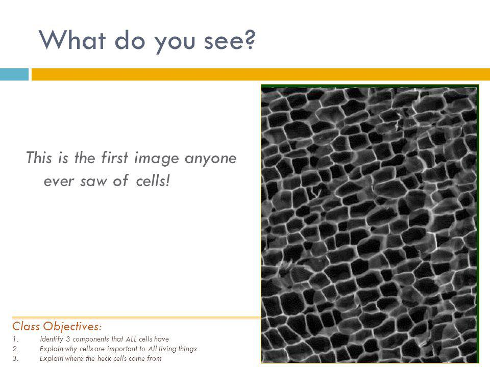 What do you see This is the first image anyone ever saw of cells!