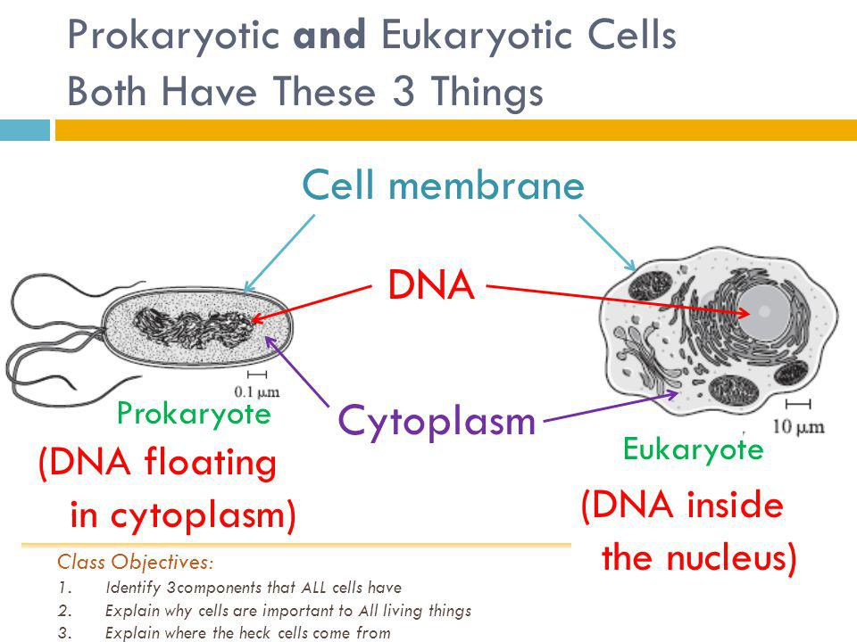 Prokaryotic and Eukaryotic Cells Both Have These 3 Things