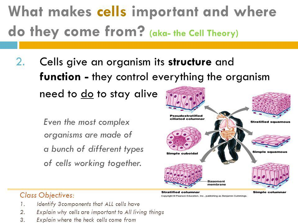 What makes cells important and where do they come from