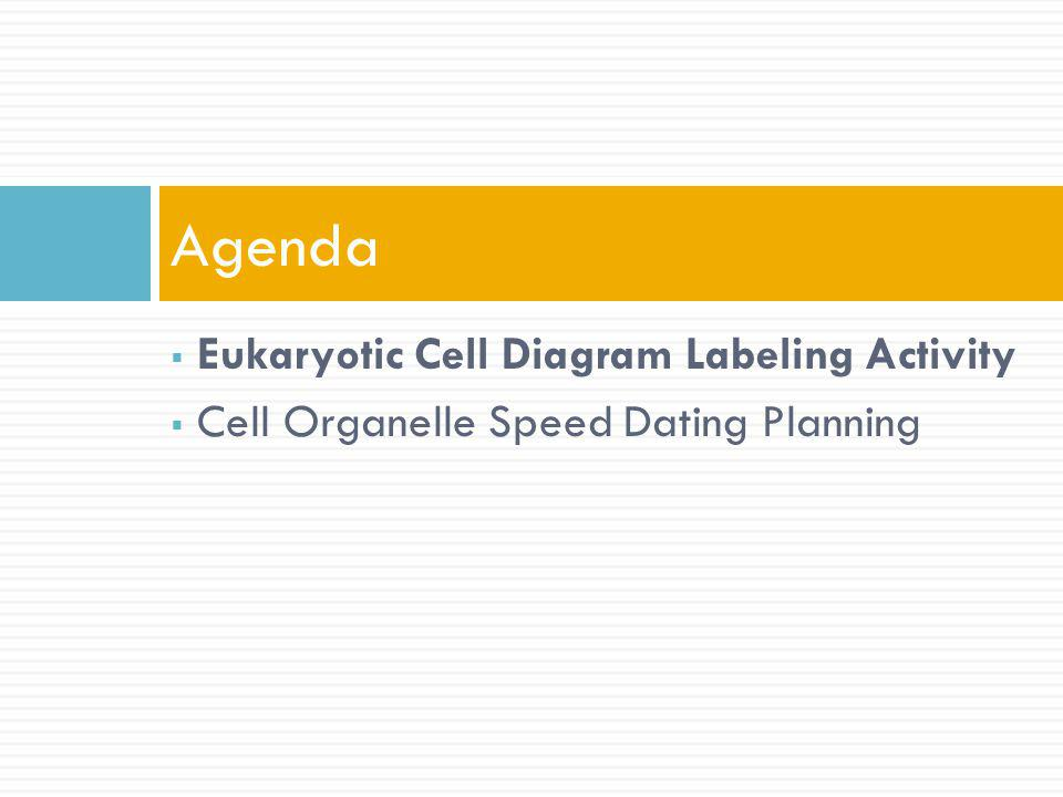 Agenda Eukaryotic Cell Diagram Labeling Activity