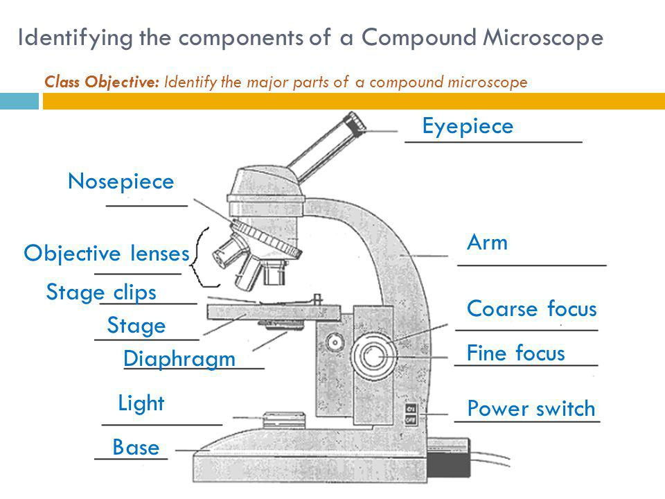 Identifying the components of a Compound Microscope