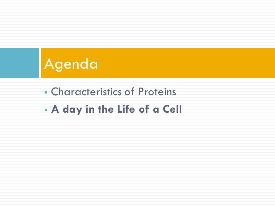 Agenda Characteristics of Proteins A day in the Life of a Cell